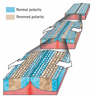 C Magnetic Stripes Are Evidence Of Seafloor Spreading   Conceptual Academy